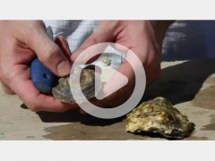 Sewall_Oysters101